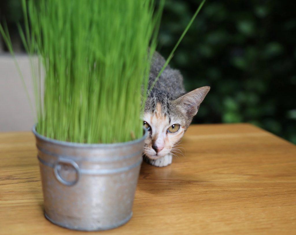 Ad Lib Hotel Cat
